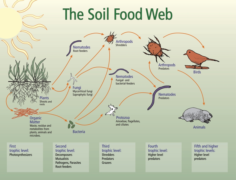 Image: U.S. Department of Agriculture