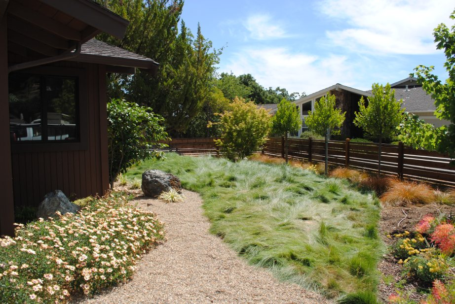 Landscape designer Julie Orr used Agrostis Palens to  beautiful effect, noting Native Bentgrass does well in full sun and creates a more flowing, meadow-like lawn.