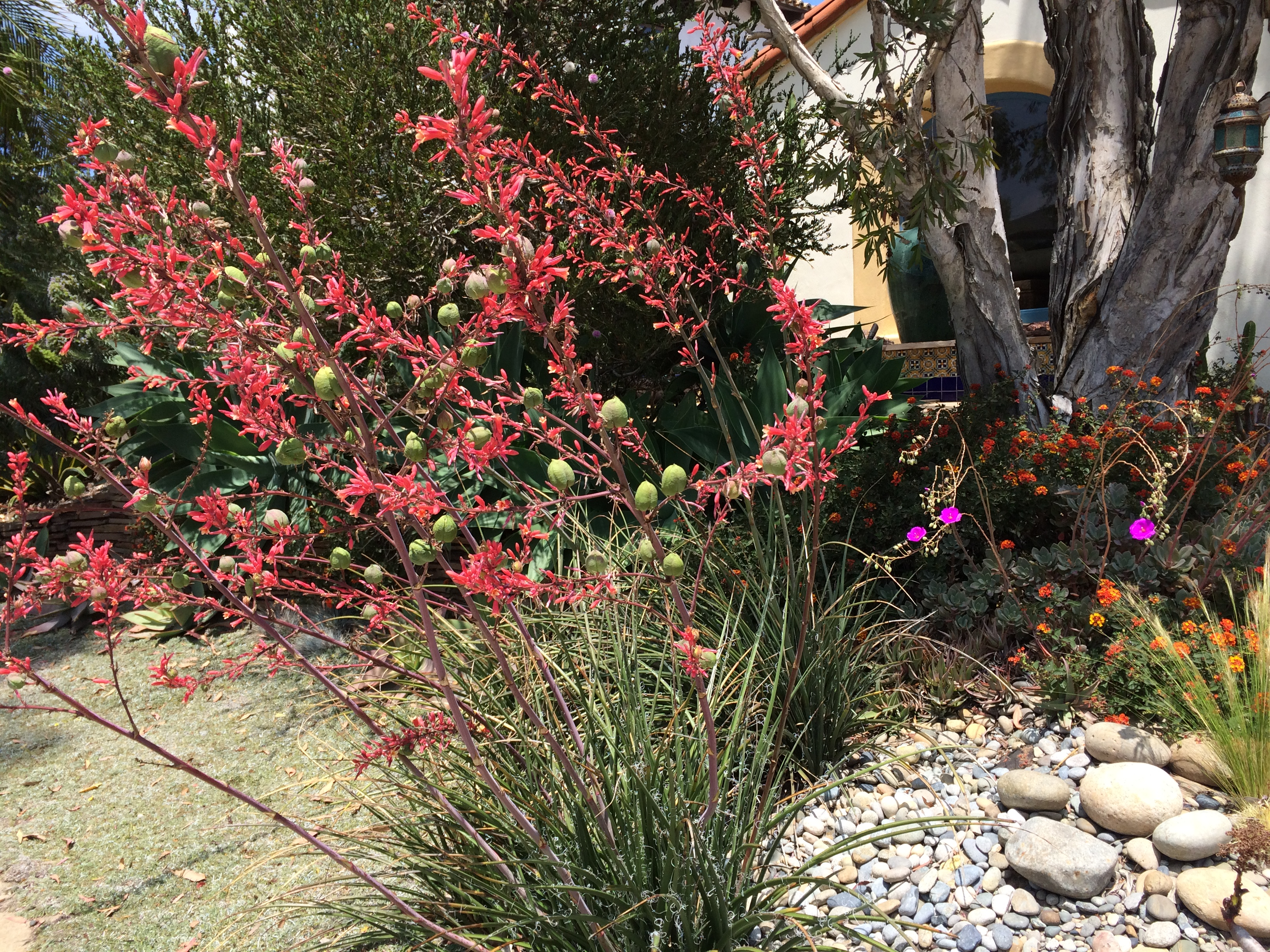 How To Integrate Succulents Into a Water-wise Garden | AHBE LAB