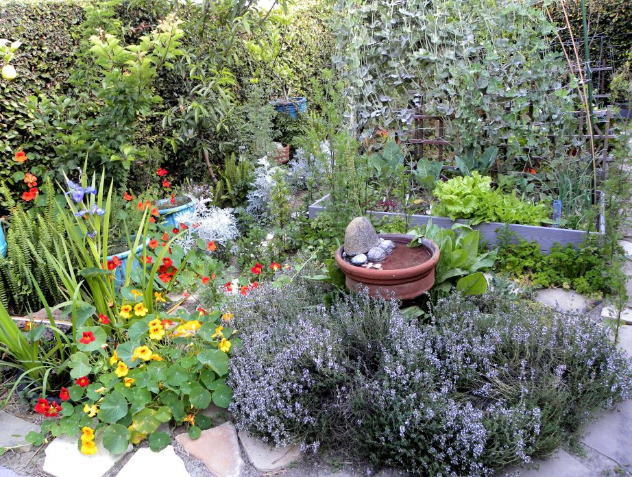 Aspirations and admiration of a garden as beautiful as this one from Lou Murray has motivated me to search for supplemental water sources for my garden.
