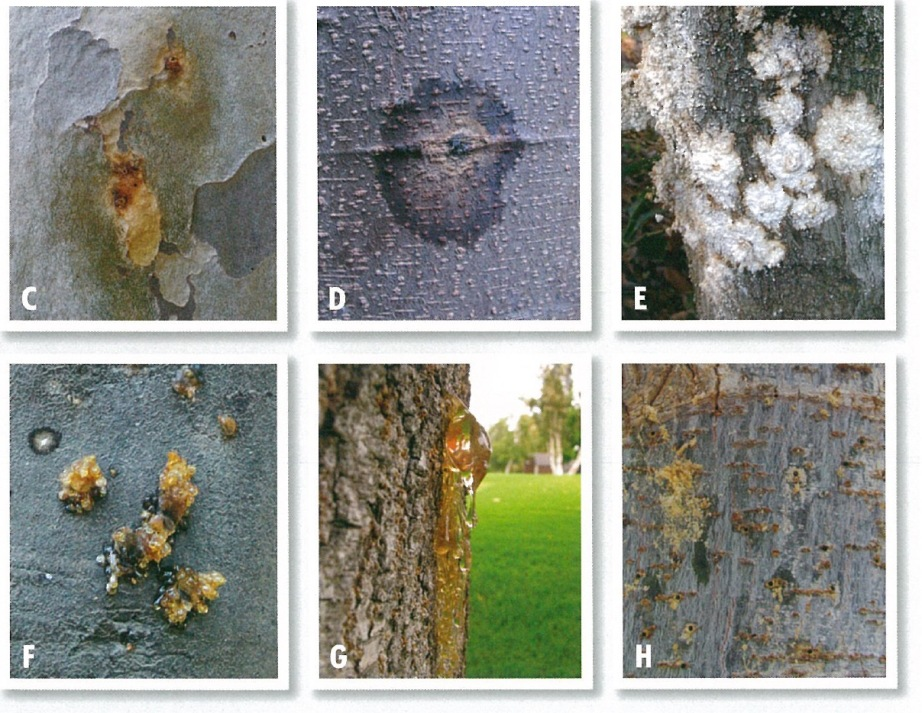 Click here for a guide to symptoms in various tree species.
