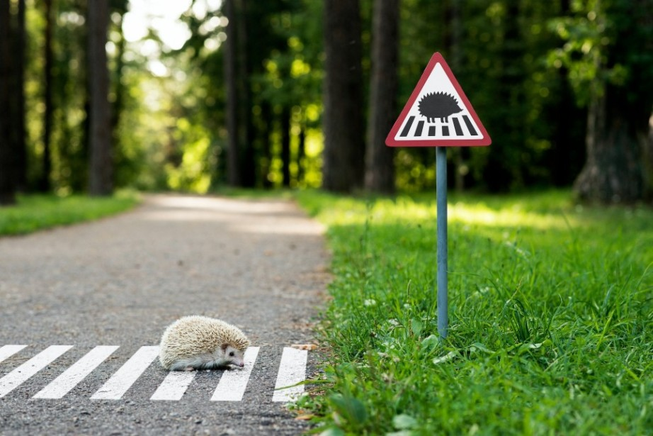 TinyRoadSign-Project-hedgehogcrossing