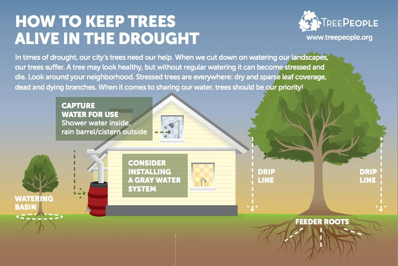 Click image for complete infographic by Treepeople.org.