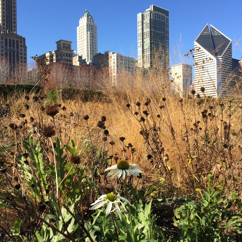 Lurie Garden in Fall, photo by Linda Daley)