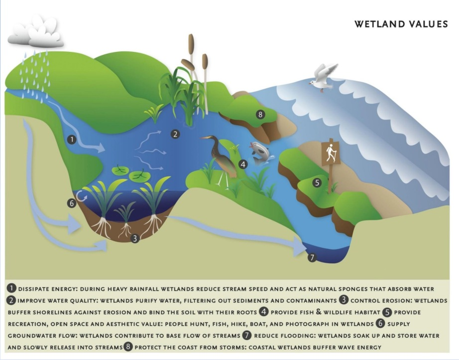 Wetlands graphic sourced from Wetland Function Estimates from Landscape Level Analysis and Field Assessments.