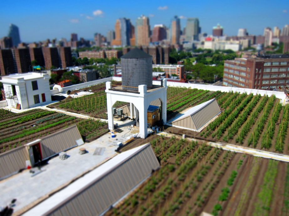The rooftop gardens of the Brooklyn Grange Navy Yard. CC BY-NC-SA 2.0 photo by Gonzlaught.