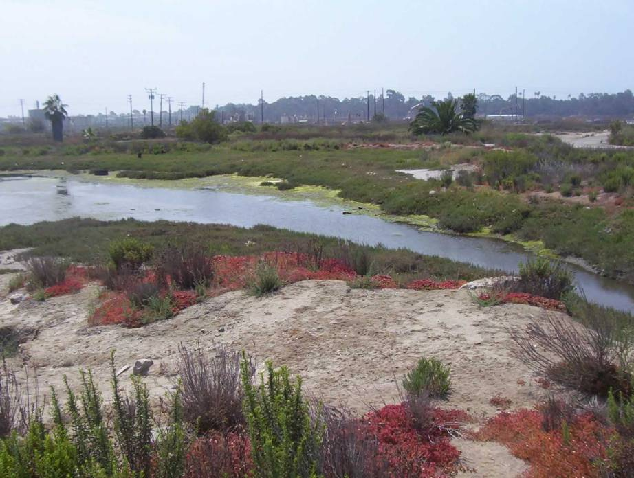 The Zedler Marsh at Los Cerritos Wetlands, at the border between Los Angeles and Orange Counties. Creative Commons photo by Cec4711.