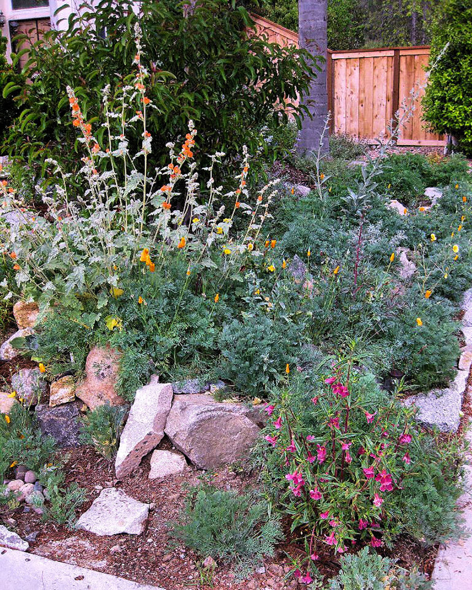California Native Plant Garden. Creative Commons photo by Mechanoid Dolly
